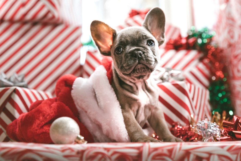 puppy dog in Christmas decoration