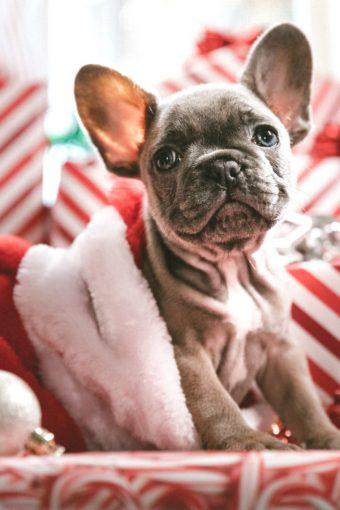 De Tijd Naar Kerst Toe (+ Winactie)