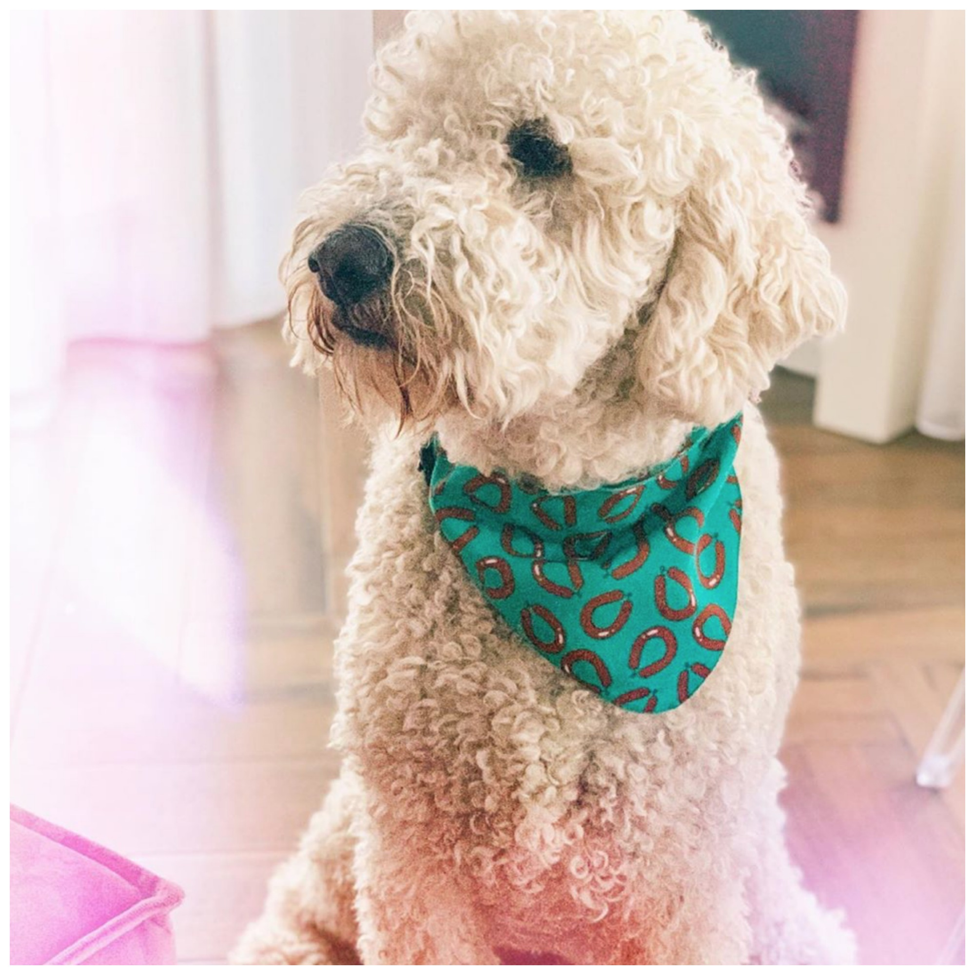 Hema hond rookworst bandana