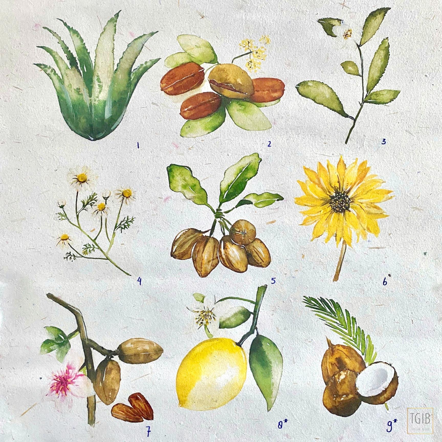 Nivea Naturally Good Review + Eerste Indruk ingredients art