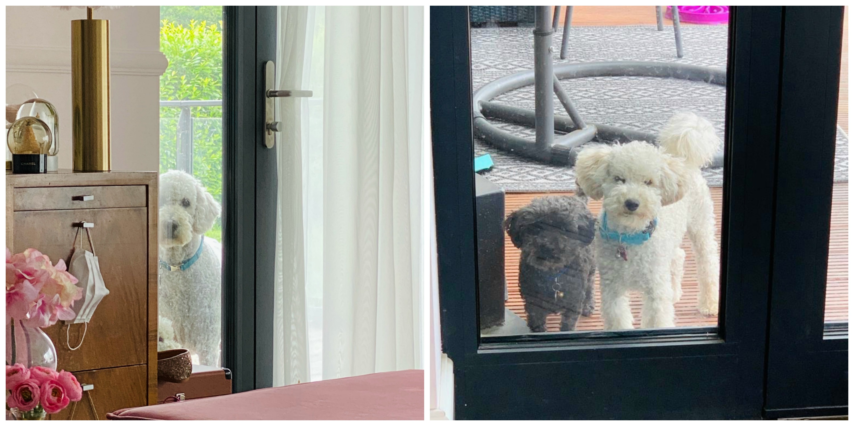 Snack-O-Clock En Een Mini Break dogs window